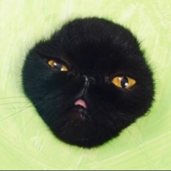 Авокадо Дьявола