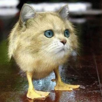 Кот Мудачи