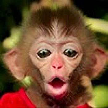 откат crazy monkey по системе