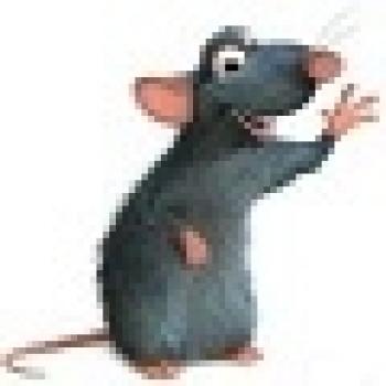 крыс лесной