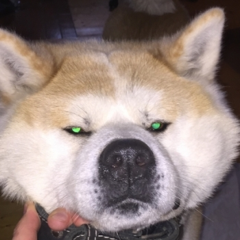 Злюкен Собакен