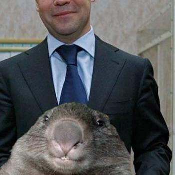 Хомяк Медведева