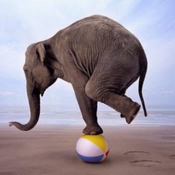 Слон Ультры